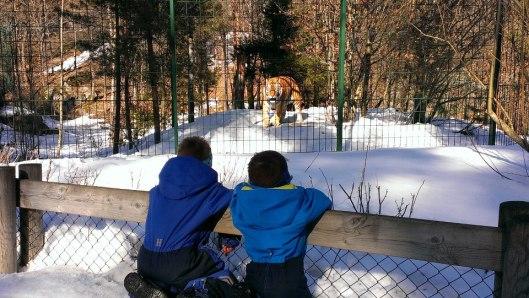 dyreparken1