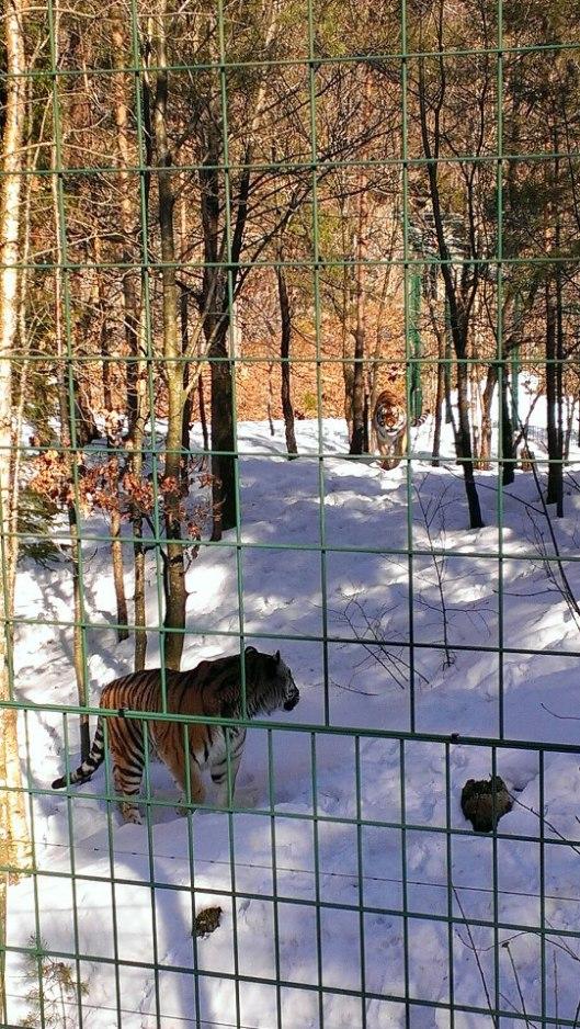 dyreparken2