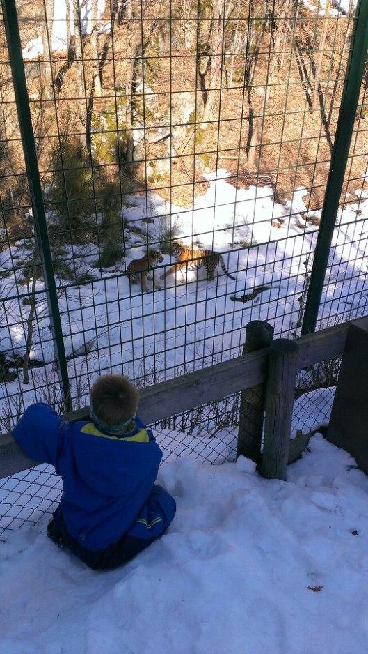 dyreparken3