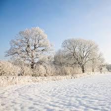 snowchristmas